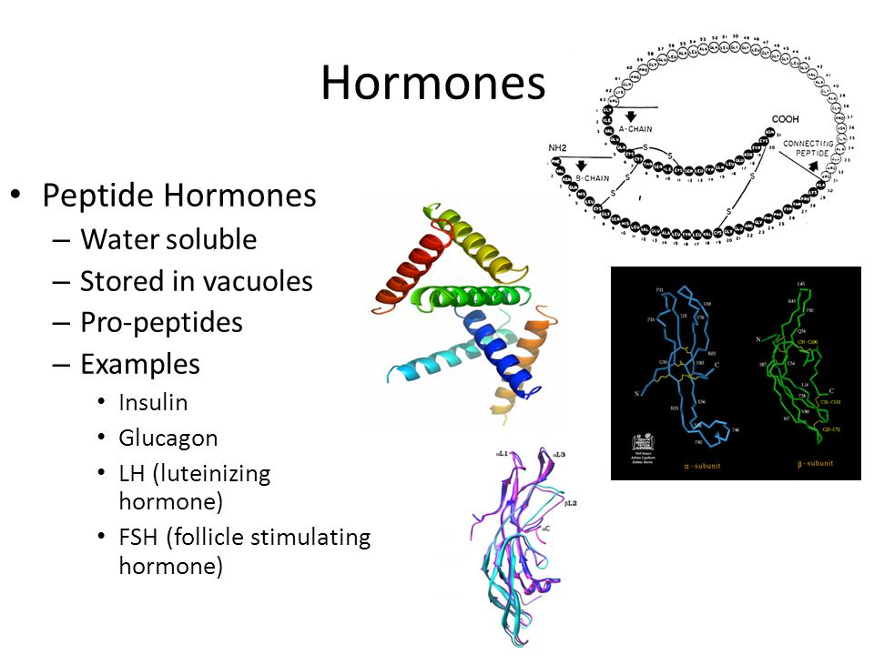 Hormones Peptide Hormones – Water soluble – Stored in vacuoles – Pro-peptides – Examples Insulin Glucagon LH (luteinizing hormone) FSH (follicle stimulating hormone)