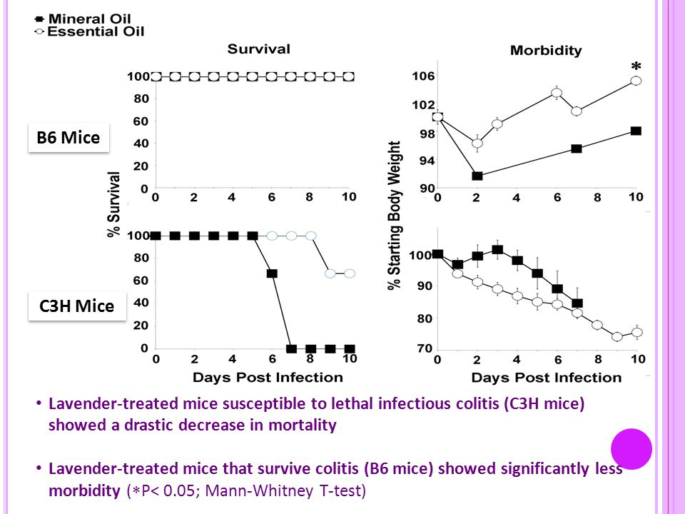 Lavender-treated mice susceptible to lethal infectious colitis (C3H mice) showed a drastic decrease in mortality Lavender-treated mice that survive colitis (B6 mice) showed significantly less morbidity (  P< 0.05; Mann-Whitney T-test) B6 Mice C3H Mice