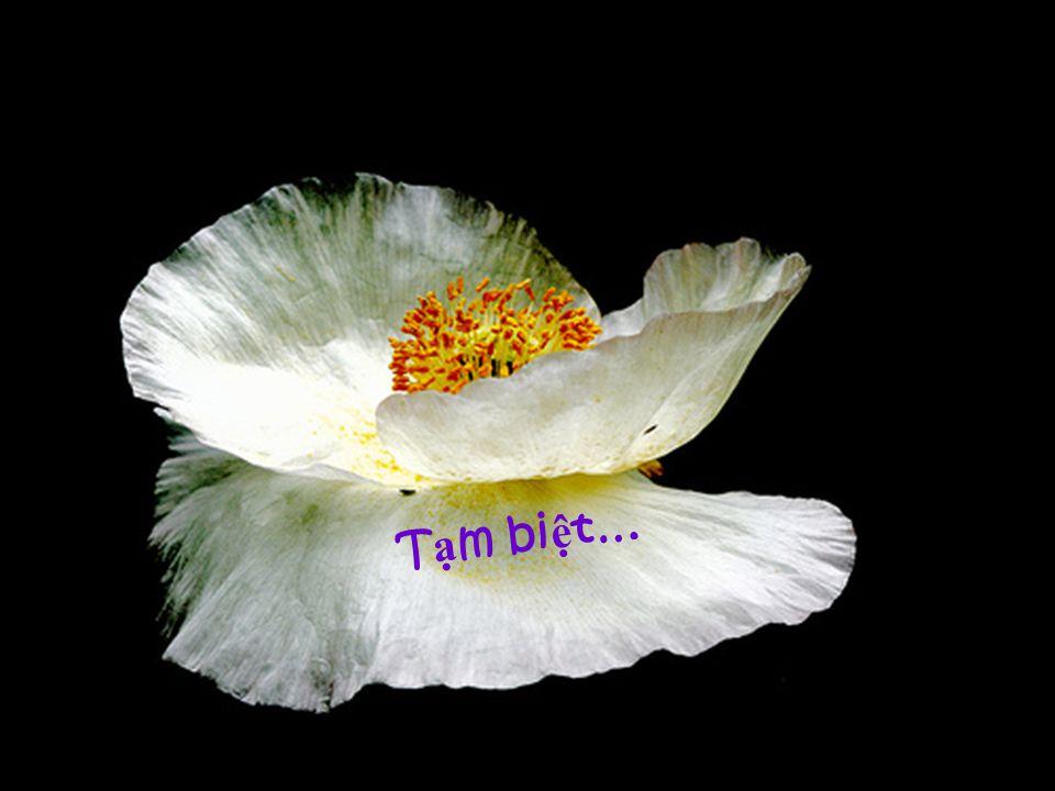 Cho hương hồn em tôi & những người Việt Nam đã chết trên đường đi tìm tự do!