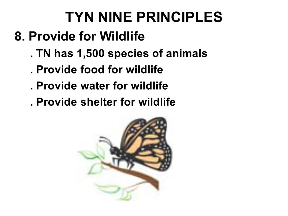 TYN NINE PRINCIPLES 8. Provide for Wildlife. TN has 1,500 species of animals.