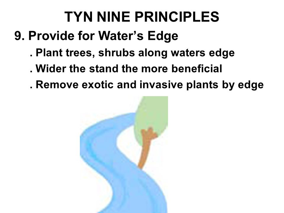TYN NINE PRINCIPLES 9. Provide for Water's Edge. Plant trees, shrubs along waters edge.