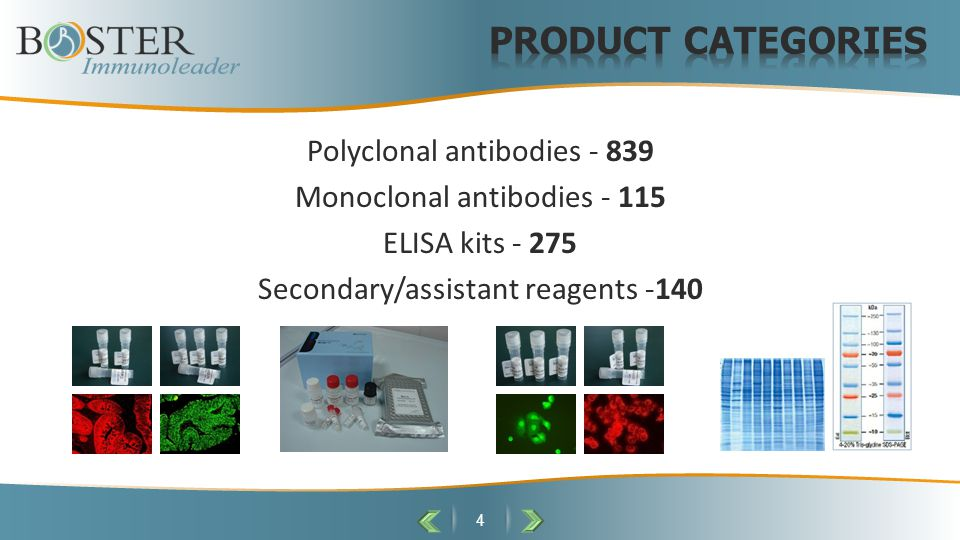 Polyclonal antibodies - 839 Monoclonal antibodies - 115 ELISA kits - 275 Secondary/assistant reagents -140 4