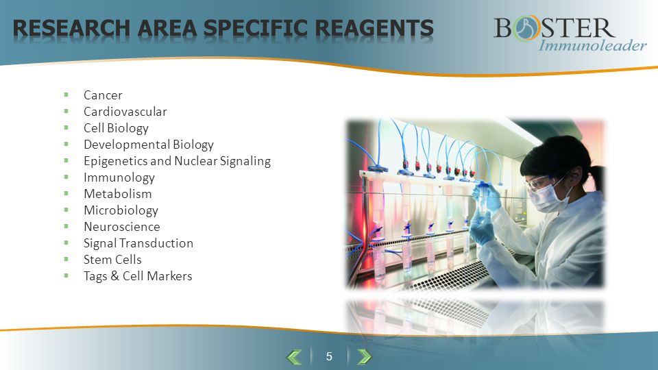 6  Boster believes in providing good quality antibodies and ELISA kits with transparency.