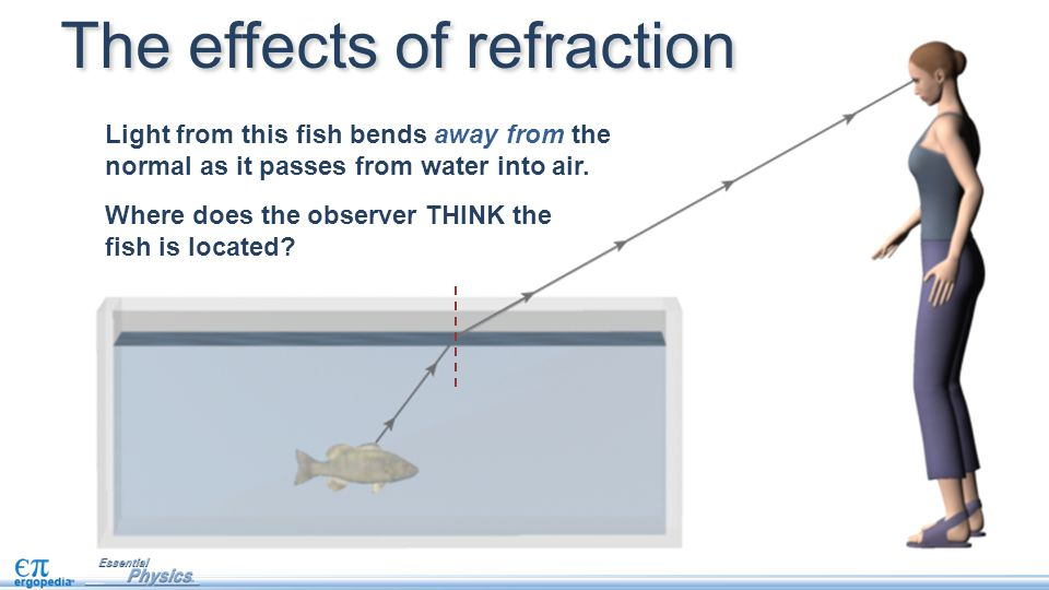 The effects of refraction Light from this fish bends away from the normal as it passes from water into air. Where does the observer THINK the fish is