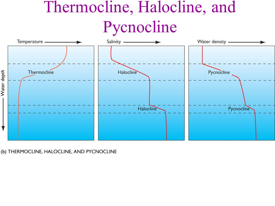 Thermocline, Halocline, and Pycnocline