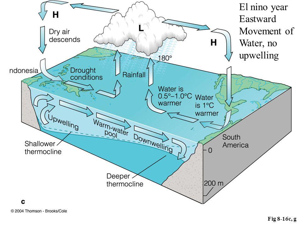 Fig 8-16c, g El nino year Eastward Movement of Water, no upwelling