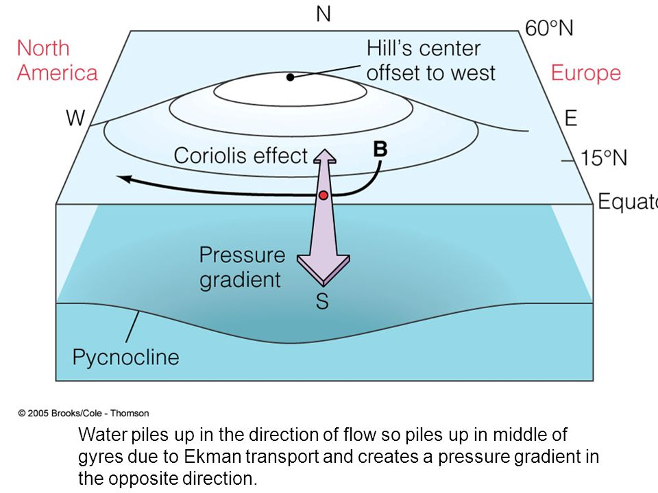 Water piles up in the direction of flow so piles up in middle of gyres due to Ekman transport and creates a pressure gradient in the opposite direction.