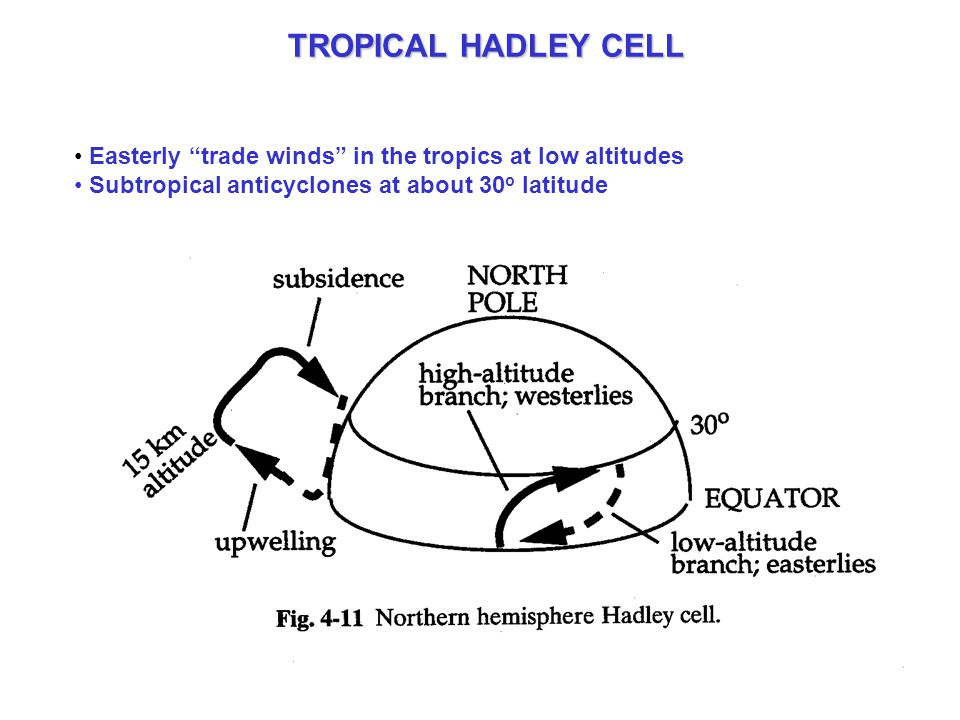TROPICAL HADLEY CELL Easterly trade winds in the tropics at low altitudes Subtropical anticyclones at about 30 o latitude