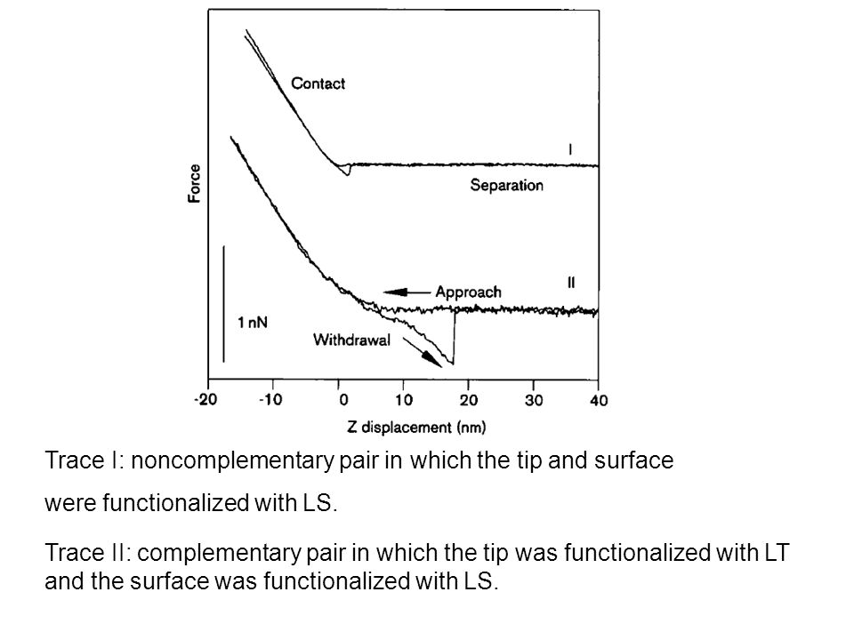 Trace I: noncomplementary pair in which the tip and surface were functionalized with LS. Trace II: complementary pair in which the tip was functionali