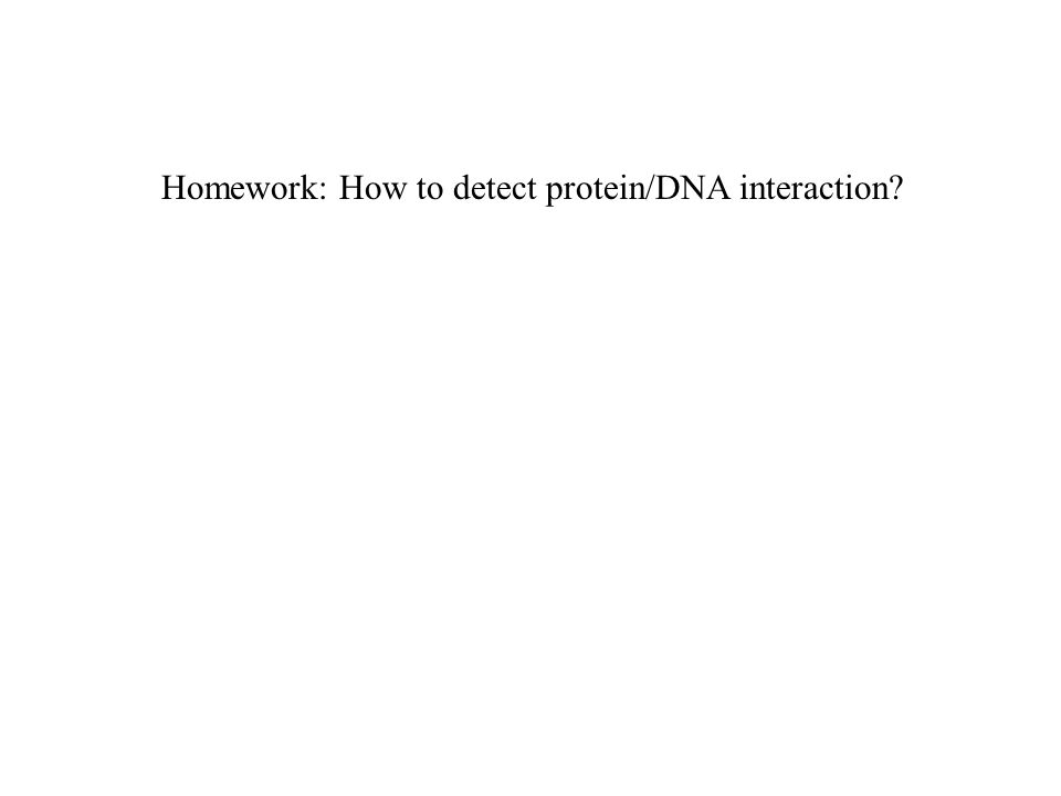 Homework: How to detect protein/DNA interaction?