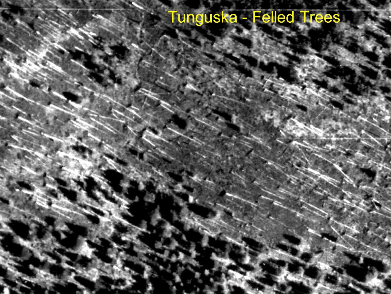 Tunguska - Felled Trees