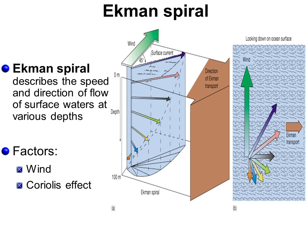 Ekman spiral Ekman spiral describes the speed and direction of flow of surface waters at various depths Factors: Wind Coriolis effect