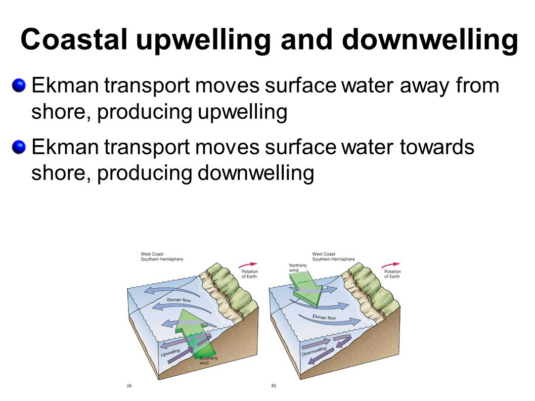 Coastal upwelling and downwelling Ekman transport moves surface water away from shore, producing upwelling Ekman transport moves surface water towards shore, producing downwelling