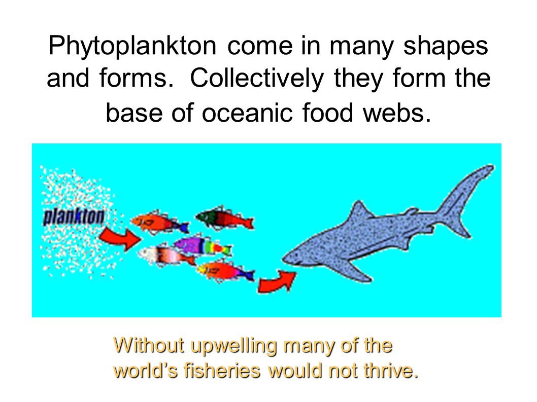 Phytoplankton come in many shapes and forms.Collectively they form the base of oceanic food webs.