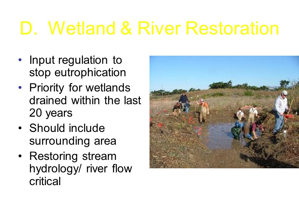 D. Wetland & River Restoration Input regulation to stop eutrophication Priority for wetlands drained within the last 20 years Should include surroundi