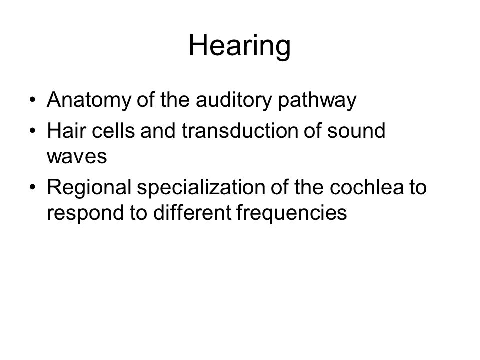 Hearing Anatomy of the auditory pathway Hair cells and transduction of sound waves Regional specialization of the cochlea to respond to different frequencies