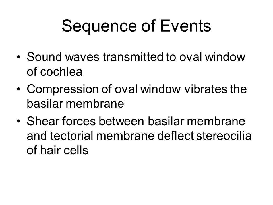 Sequence of Events Sound waves transmitted to oval window of cochlea Compression of oval window vibrates the basilar membrane Shear forces between basilar membrane and tectorial membrane deflect stereocilia of hair cells