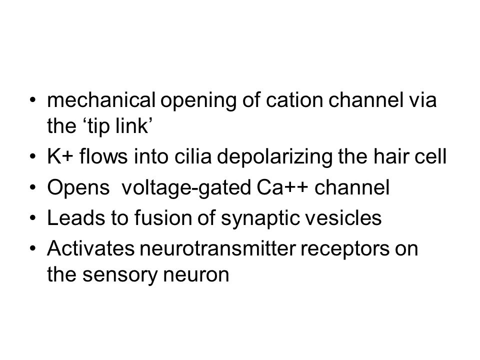 mechanical opening of cation channel via the 'tip link' K+ flows into cilia depolarizing the hair cell Opens voltage-gated Ca++ channel Leads to fusio