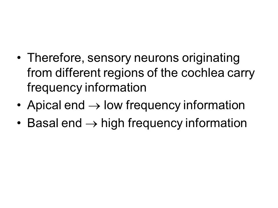 Therefore, sensory neurons originating from different regions of the cochlea carry frequency information Apical end  low frequency information Basal end  high frequency information