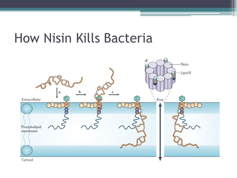 How Nisin Kills Bacteria