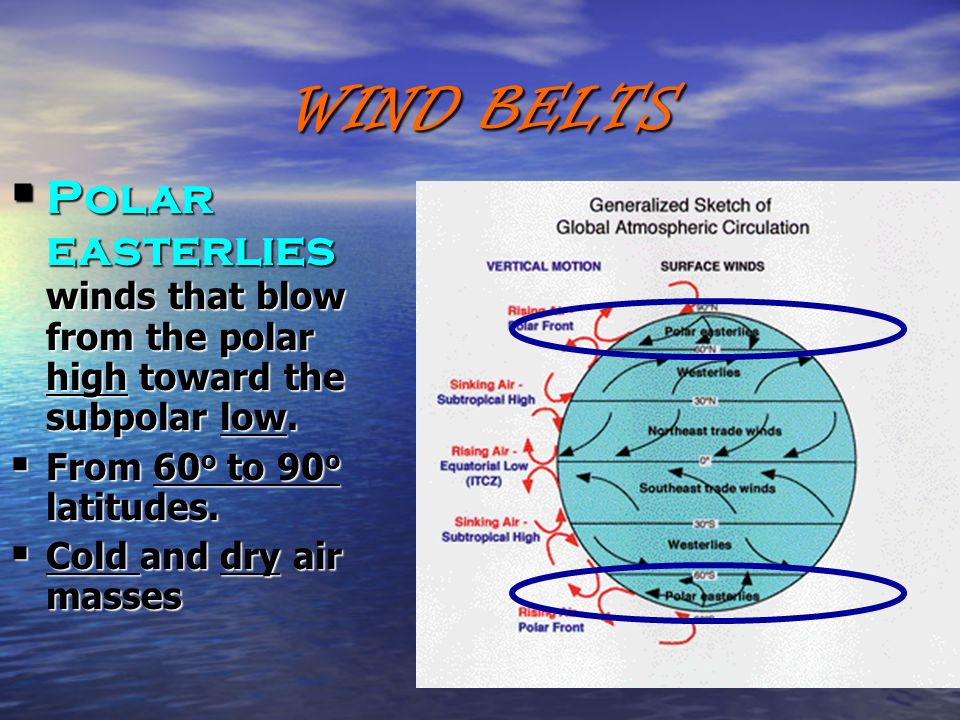 WIND BELTS  Polar easterlies winds that blow from the polar high toward the subpolar low.  From 60 o to 90 o latitudes.  Cold and dry air masses