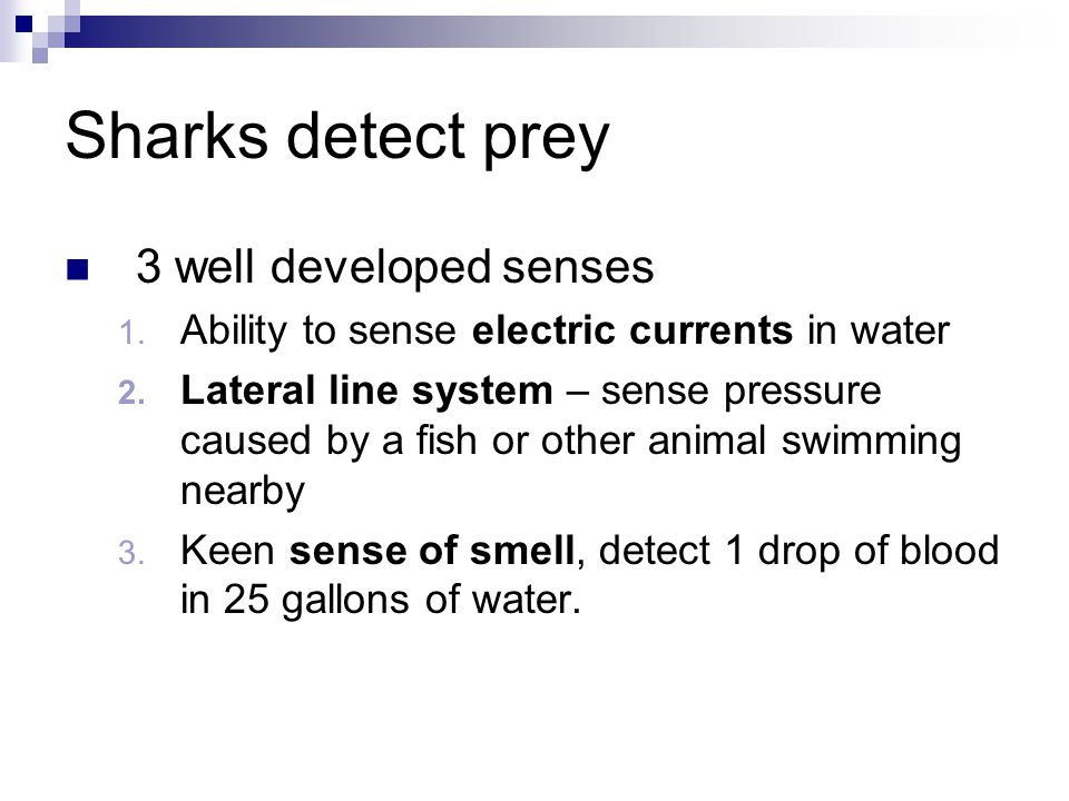 Sharks detect prey 3 well developed senses 1. Ability to sense electric currents in water 2. Lateral line system – sense pressure caused by a fish or