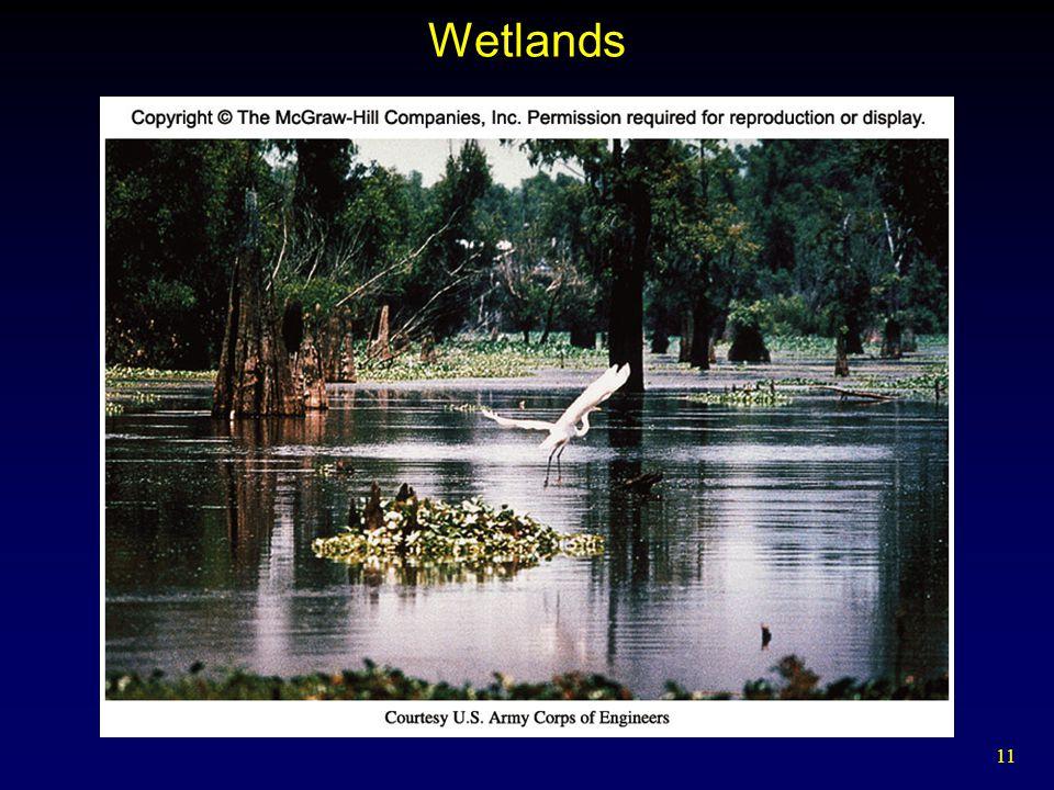 11 Wetlands