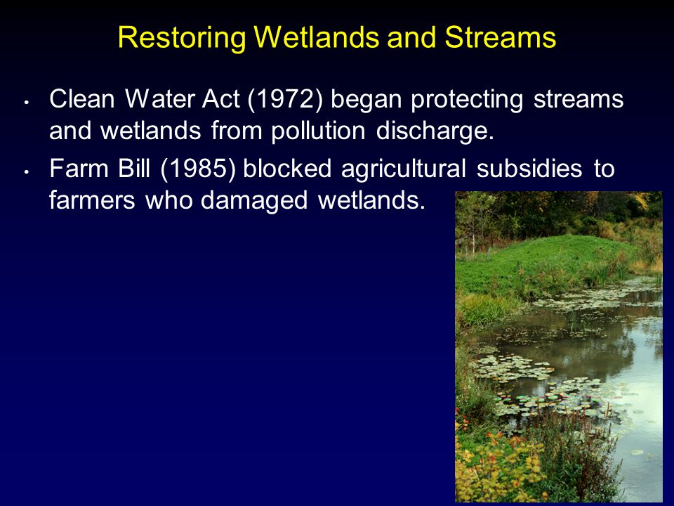 12 Restoring Wetlands and Streams Clean Water Act (1972) began protecting streams and wetlands from pollution discharge.