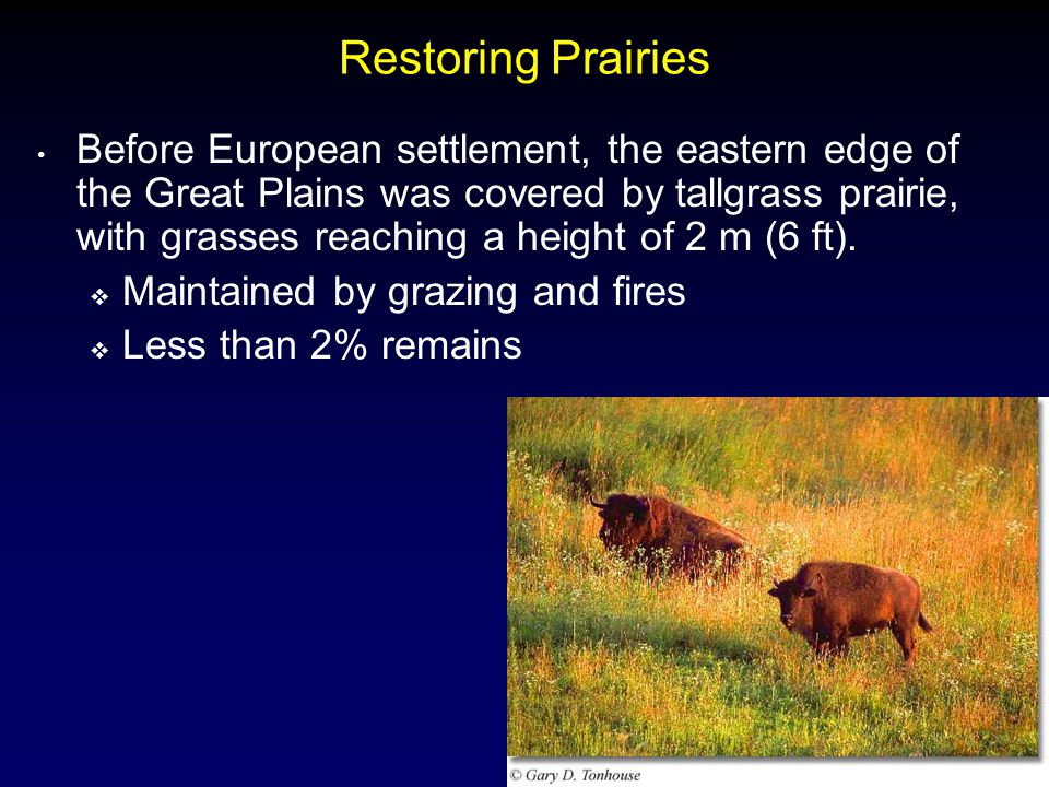 6 Restoring Prairies Before European settlement, the eastern edge of the Great Plains was covered by tallgrass prairie, with grasses reaching a height of 2 m (6 ft).