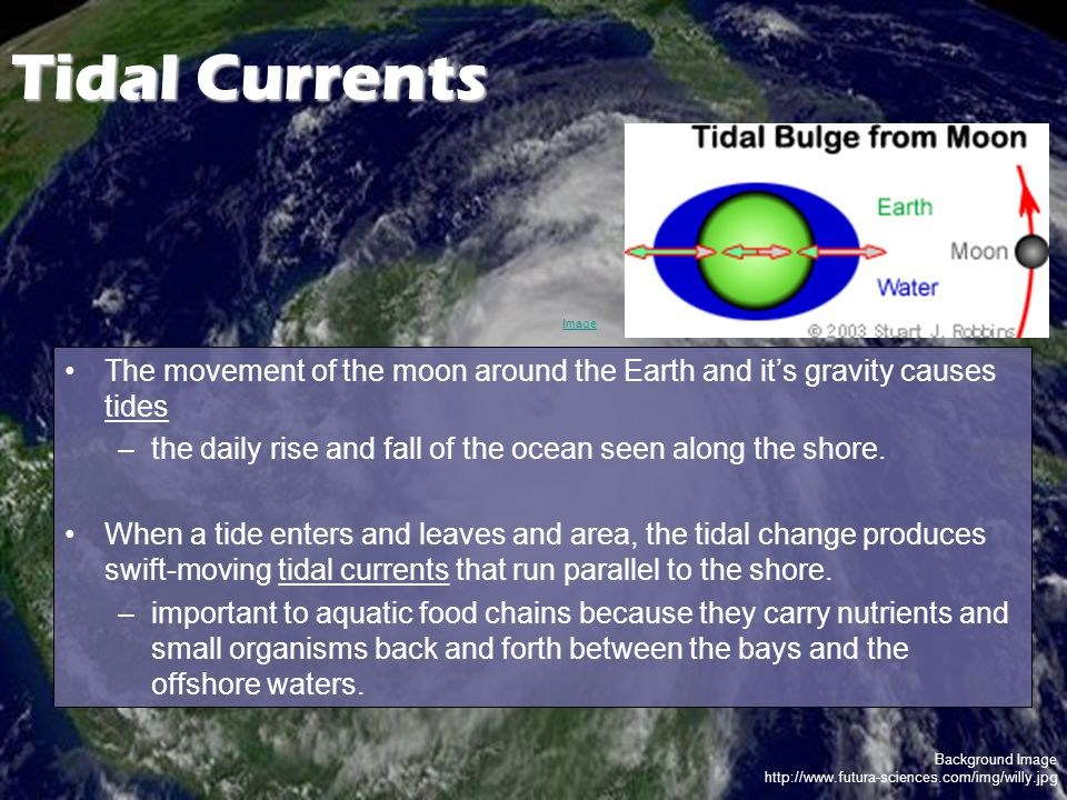 Background Image http://www.futura-sciences.com/img/willy.jpg Tidal Currents The movement of the moon around the Earth and it's gravity causes tides –the daily rise and fall of the ocean seen along the shore.