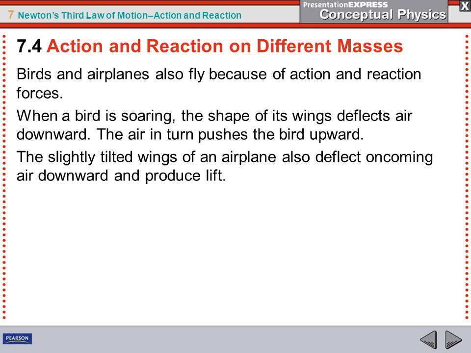 7 Newton's Third Law of Motion–Action and Reaction Birds and airplanes also fly because of action and reaction forces. When a bird is soaring, the sha