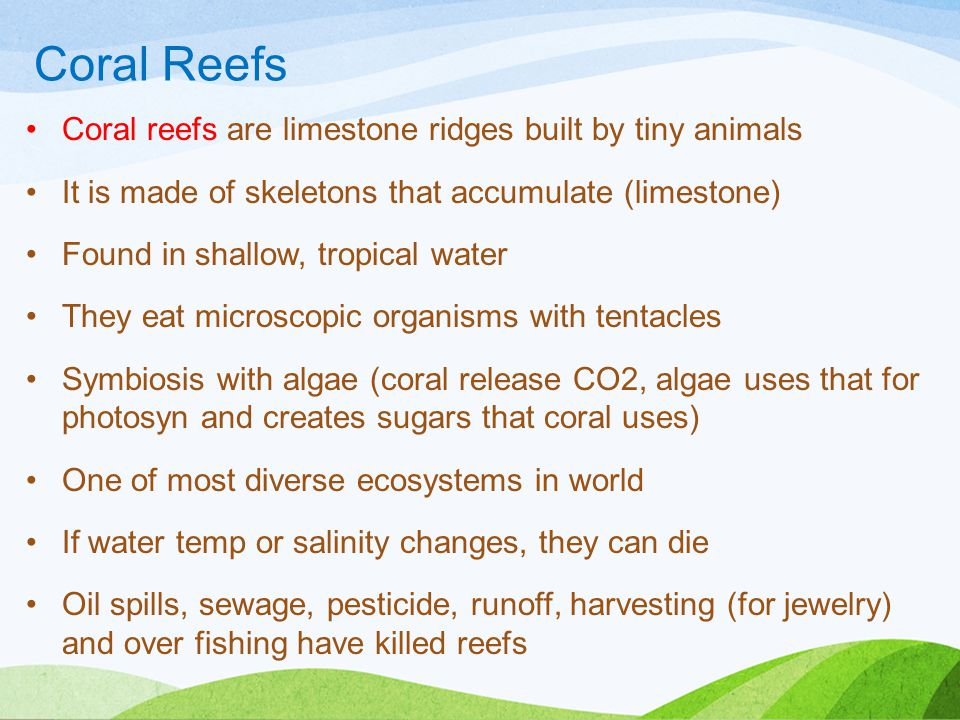 Coral Reefs Coral reefs are limestone ridges built by tiny animals It is made of skeletons that accumulate (limestone) Found in shallow, tropical water They eat microscopic organisms with tentacles Symbiosis with algae (coral release CO2, algae uses that for photosyn and creates sugars that coral uses) One of most diverse ecosystems in world If water temp or salinity changes, they can die Oil spills, sewage, pesticide, runoff, harvesting (for jewelry) and over fishing have killed reefs
