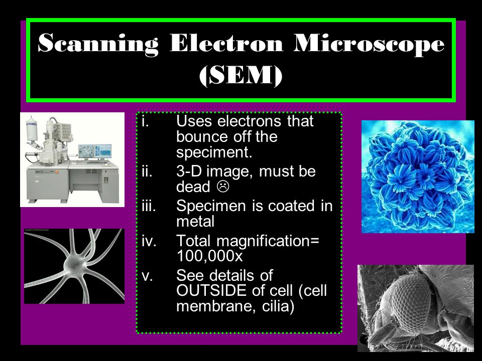 Scanning Electron Microscope (SEM) i.Uses electrons that bounce off the speciment.