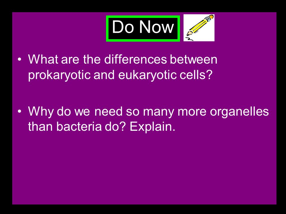 Do Now What are the differences between prokaryotic and eukaryotic cells.