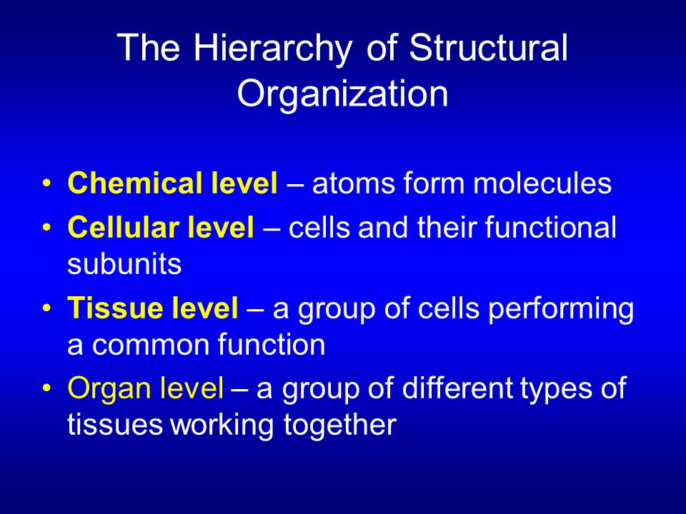 The Hierarchy of Structural Organization Chemical level – atoms form molecules Cellular level – cells and their functional subunits Tissue level – a g