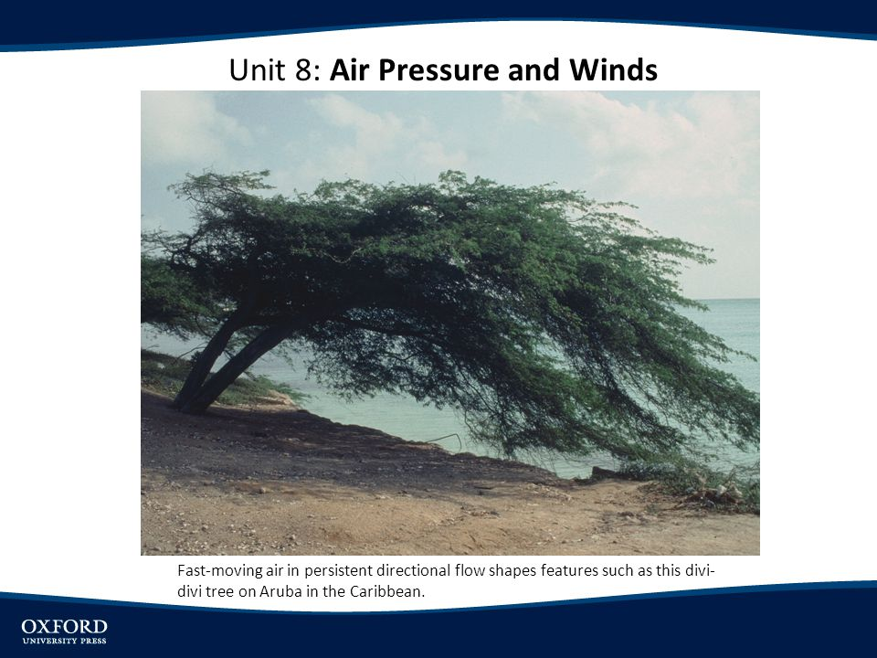Unit 8: Air Pressure and Winds Fast-moving air in persistent directional flow shapes features such as this divi- divi tree on Aruba in the Caribbean.