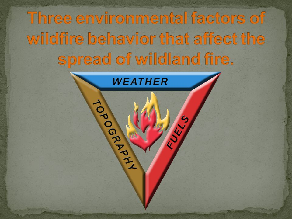 Temperature Wind Increases supply of oxygen.Drives convective heat into adjacent fuels.