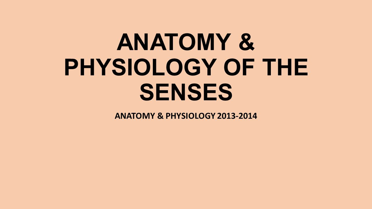 ANATOMY & PHYSIOLOGY OF THE SENSES ANATOMY & PHYSIOLOGY 2013-2014