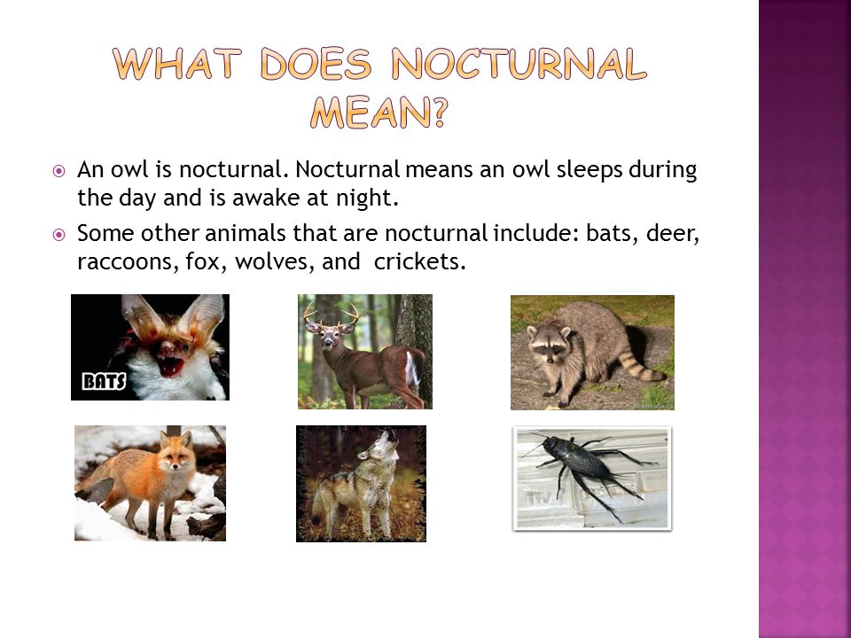  An owl is nocturnal.Nocturnal means an owl sleeps during the day and is awake at night.