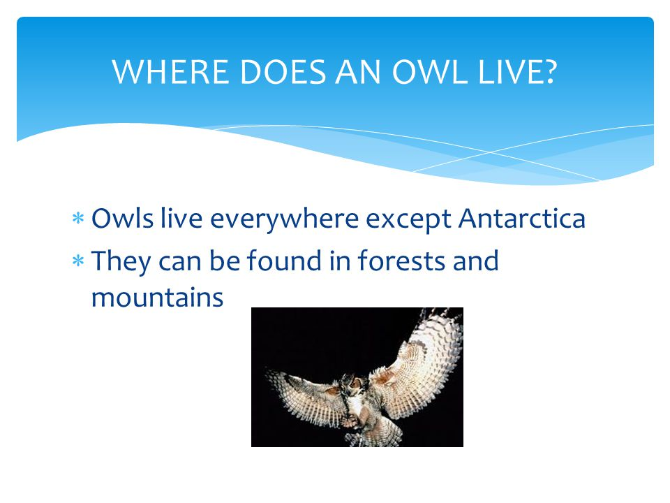  Owls live everywhere except Antarctica  They can be found in forests and mountains WHERE DOES AN OWL LIVE?