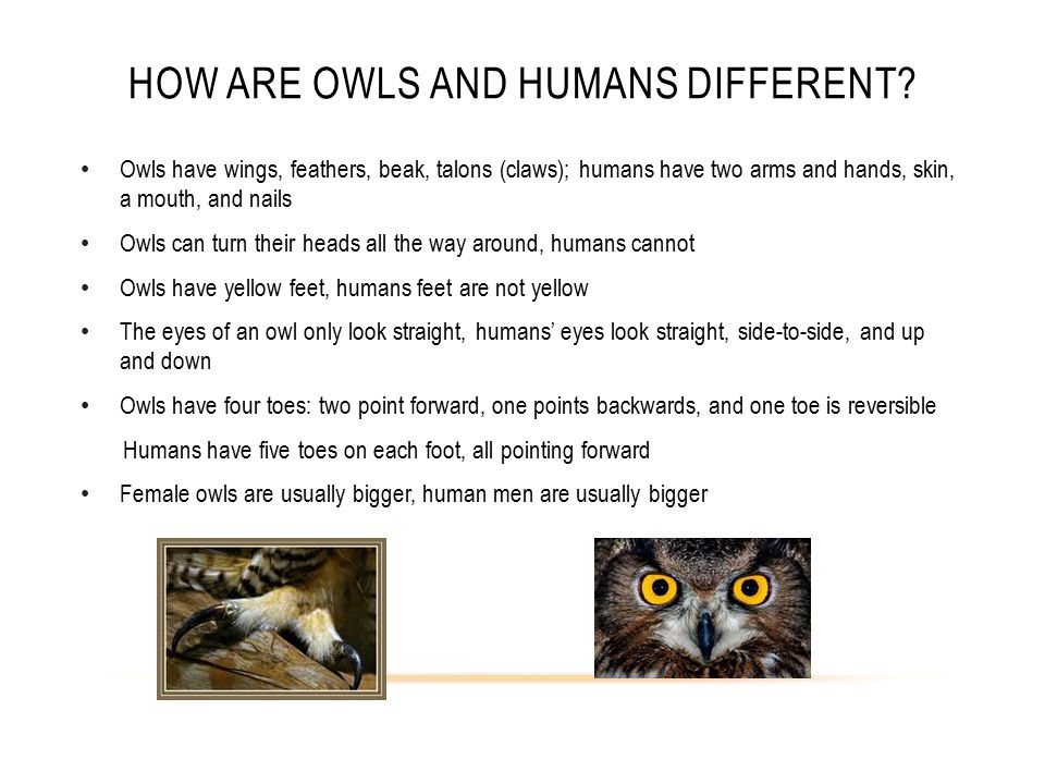 WHAT DOES AN OWL EAT AND HOW DOES IT GET ITS FOOD? Owls eat: snakes, mice, rabbits, birds, and insects. They get their food by hunting at night.