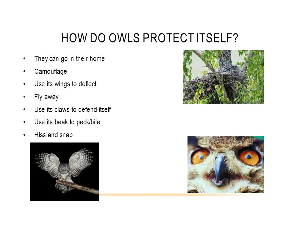 HOW DO OWLS PROTECT ITSELF.