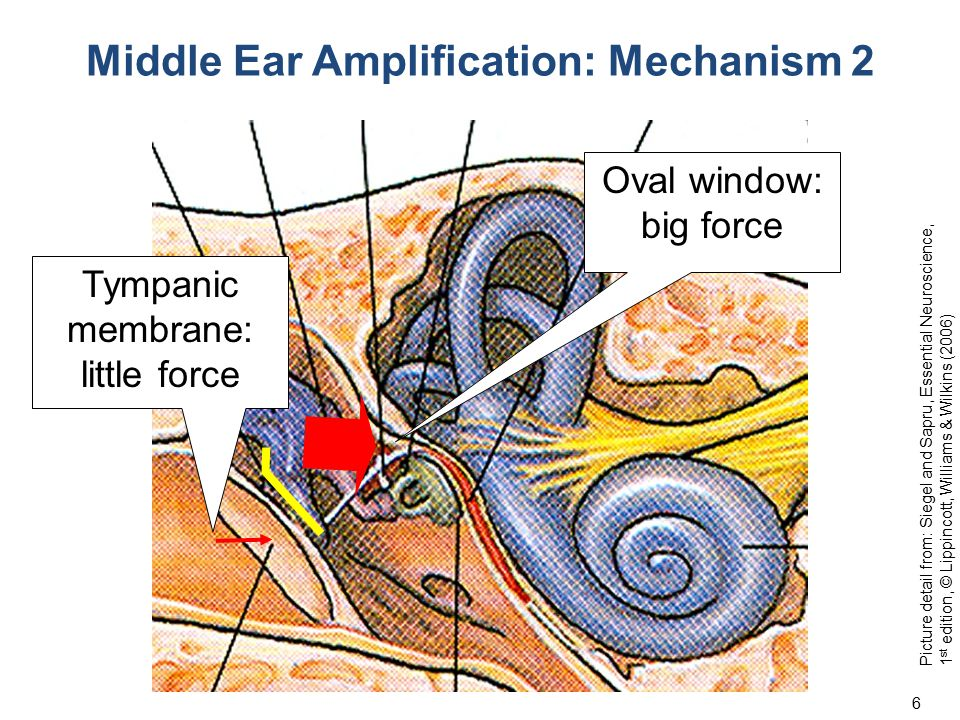 Chief Complaint: Unilateral hearing loss History: A 53 year old left handed university professor realized that he has been changing the hand in which he holds his telephone receiver to hear more clearly.