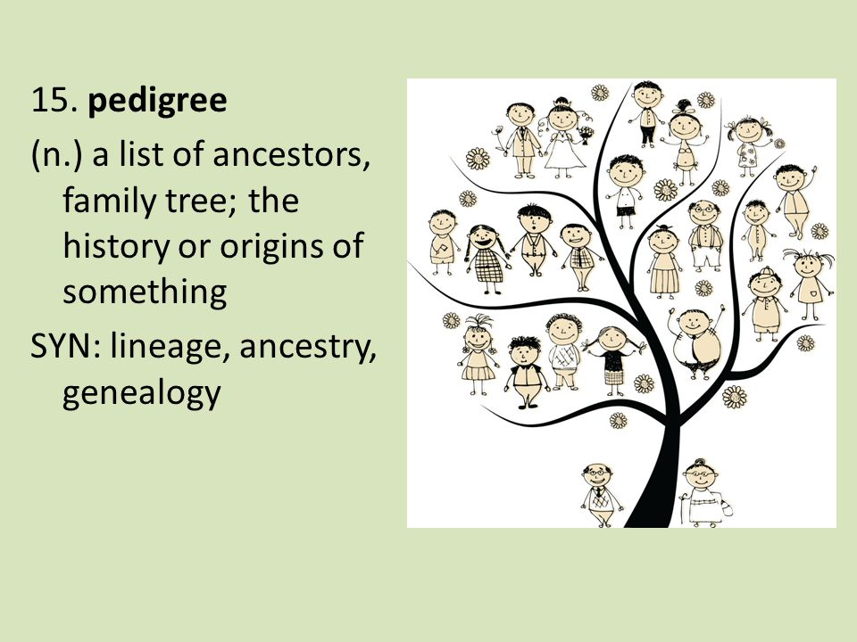 15. pedigree (n.) a list of ancestors, family tree; the history or origins of something SYN: lineage, ancestry, genealogy