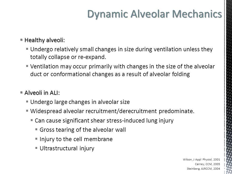 Dynamic Alveolar Mechanics Dynamic Alveolar Mechanics in the Uninjured Lung  Healthy alveoli:  Undergo relatively small changes in size during venti