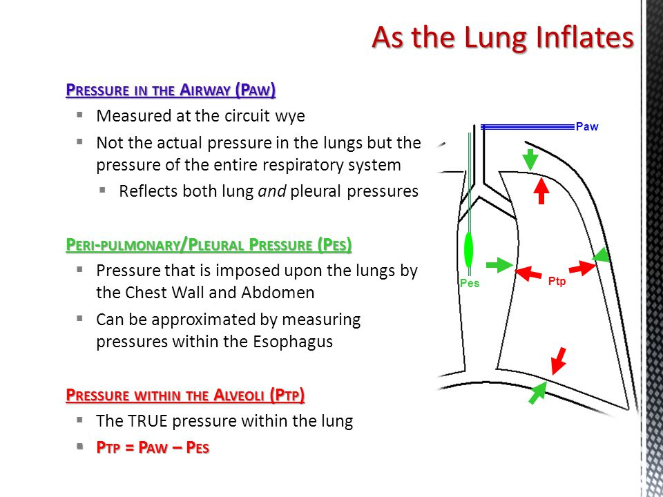P RESSURE IN THE A IRWAY (P AW )  Measured at the circuit wye  Not the actual pressure in the lungs but the pressure of the entire respiratory syste