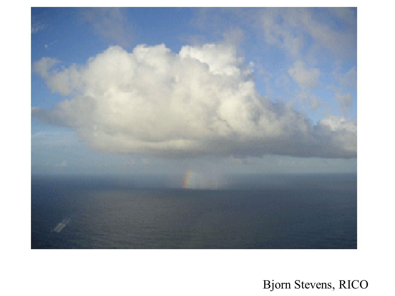 Bjorn Stevens, RICO