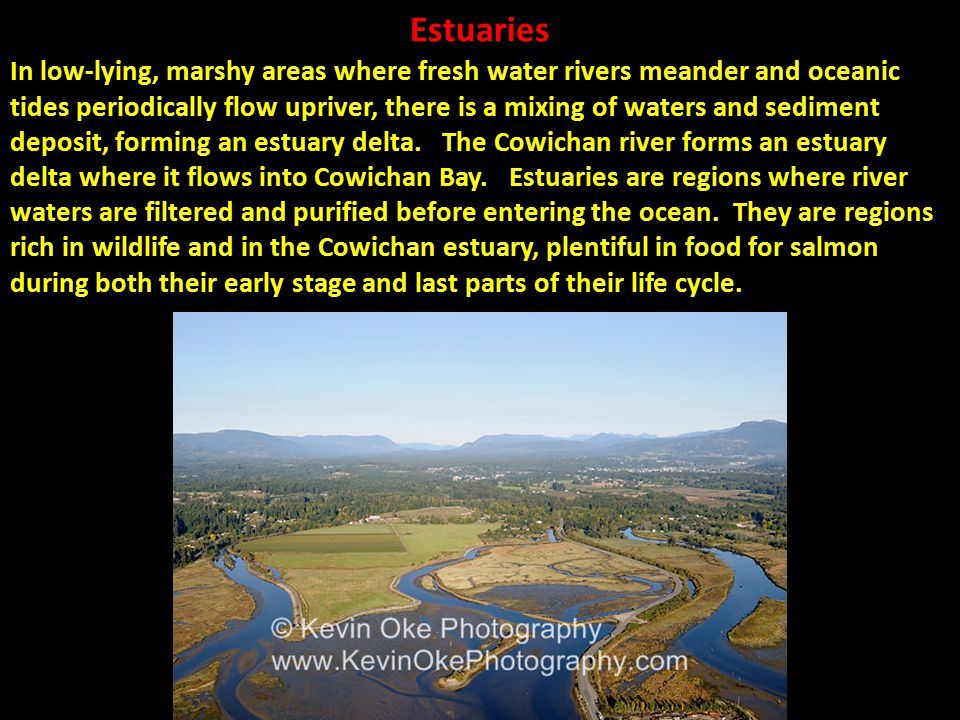 Estuaries In low-lying, marshy areas where fresh water rivers meander and oceanic tides periodically flow upriver, there is a mixing of waters and sed