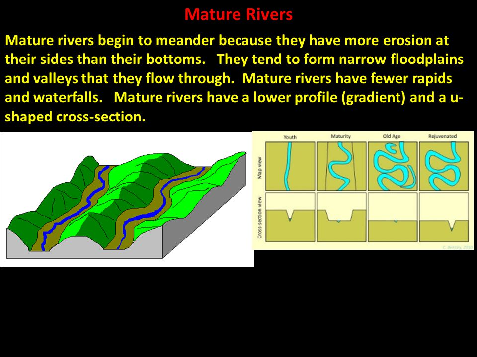 Mature Rivers Mature rivers begin to meander because they have more erosion at their sides than their bottoms. They tend to form narrow floodplains an