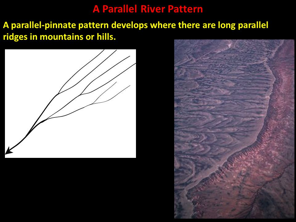 A Parallel River Pattern A parallel-pinnate pattern develops where there are long parallel ridges in mountains or hills.